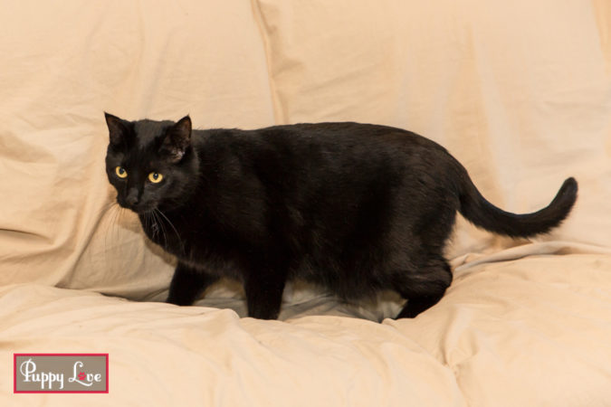 Lethbridge black cat photos