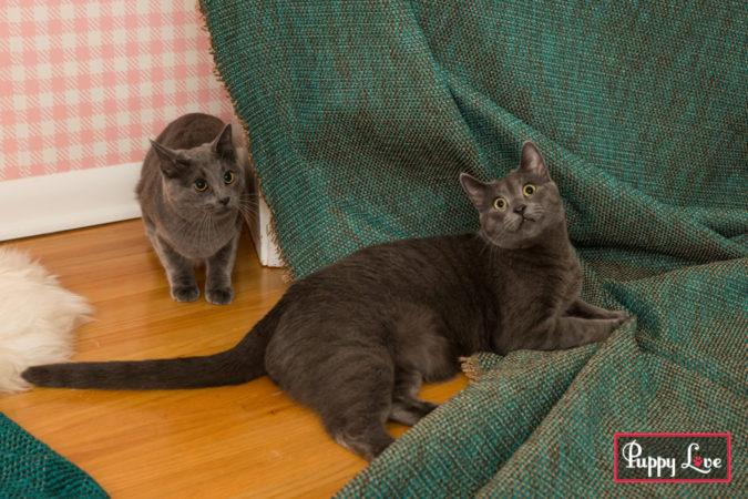 Lethbridge home based pet photography