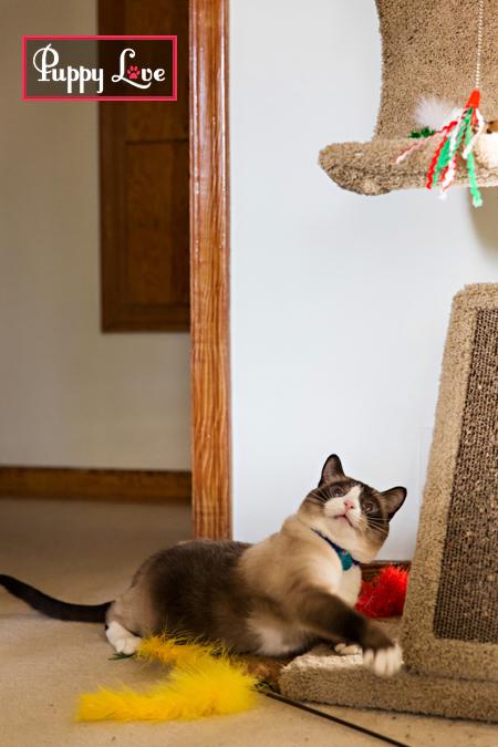 Lethbridge rescue cat photos