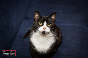 Lethbridge cat photography