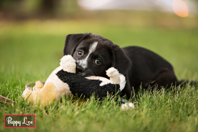 Black and white rescue puppies in Lethbridge