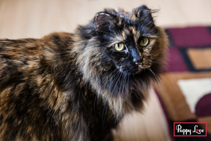 Lethbridge PAW Society cat photos