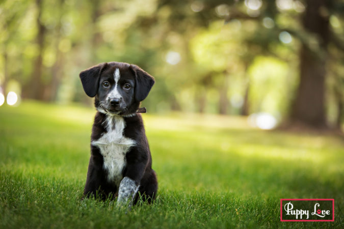 cute Black and white rescue puppies in Lethbridge