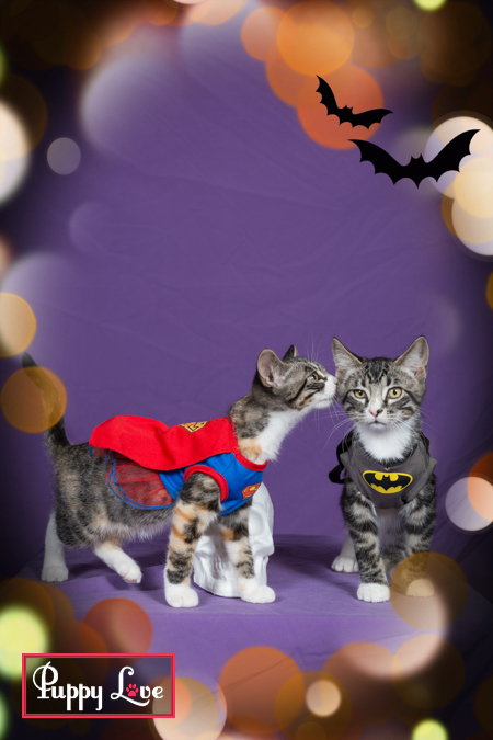 Windy City Canine Rescue Halloween fundraiser
