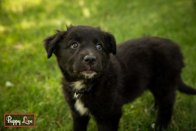 Lethbridge summer puppy portraits