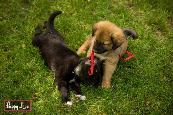 Lethbridge summer puppy photos