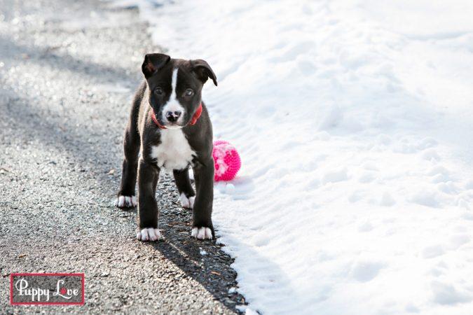 Snowy puppy photos in Lethbridge