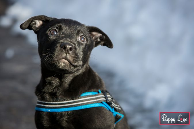 Lethbridge pet puppy photography
