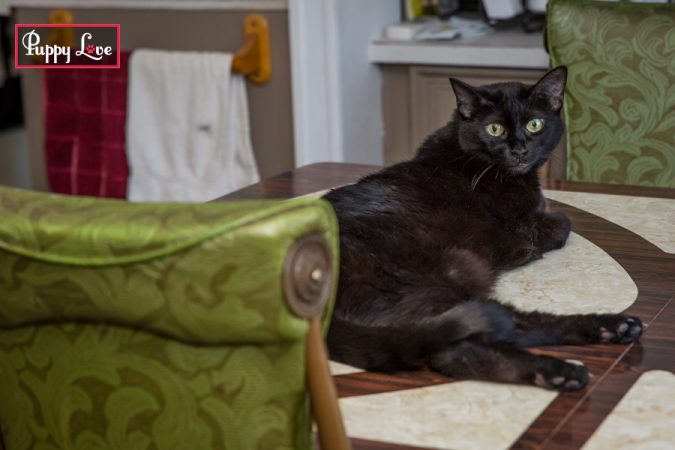 shy black cats in home portraits