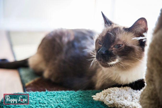 senior cat photography Lethbridge