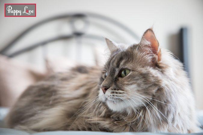 Lethbridge indoor pet photography