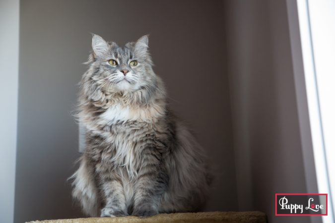 Lethbridge indoor pet photography