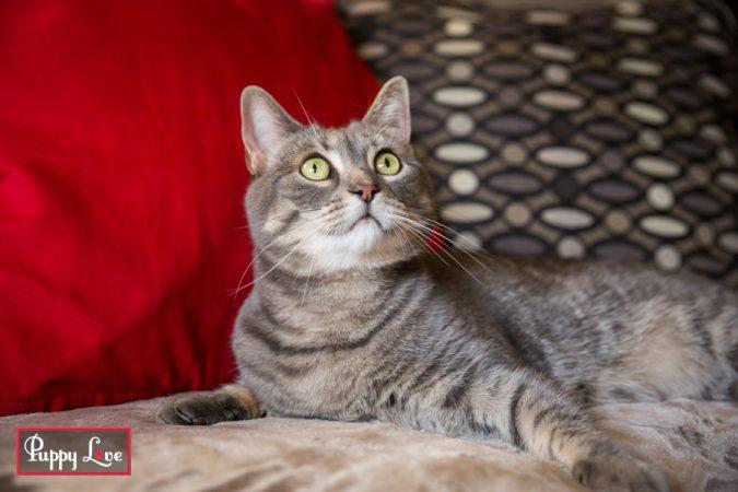 energetic tabby cat portraits