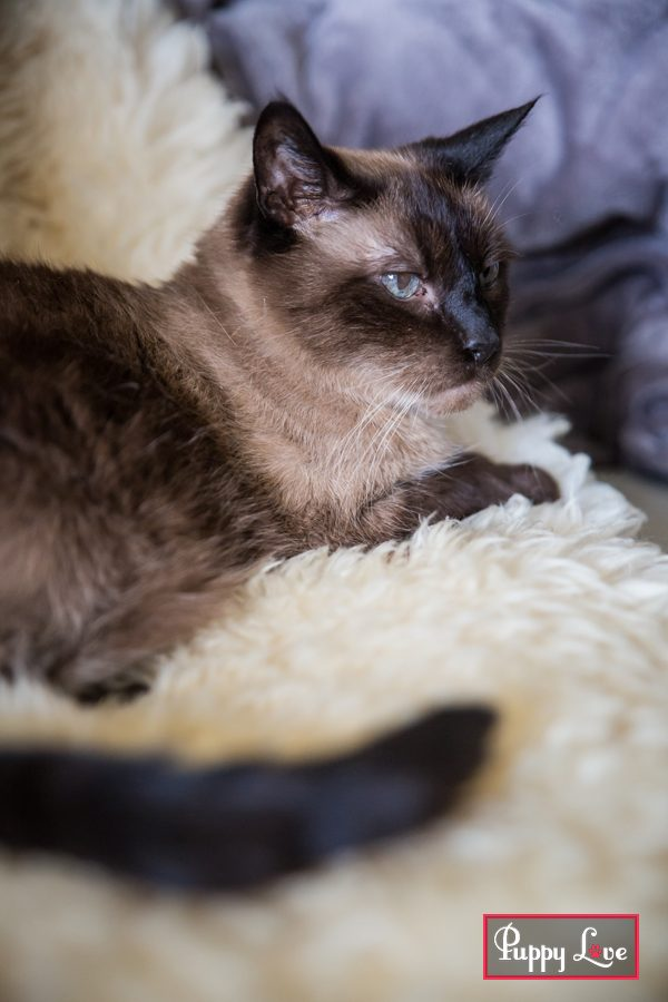 Lethbridge pet cat photography