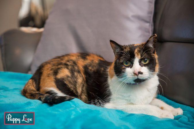 three legged cat portraits