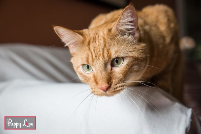 friendly orange cat photos in Lethbridge