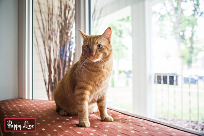friendly orange cat photos in Lethbridge