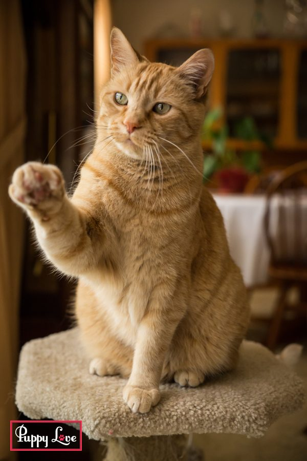 cute orange cat photos