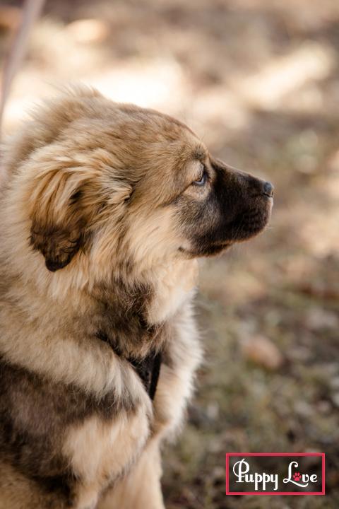 Lethbridge rescue puppy photos