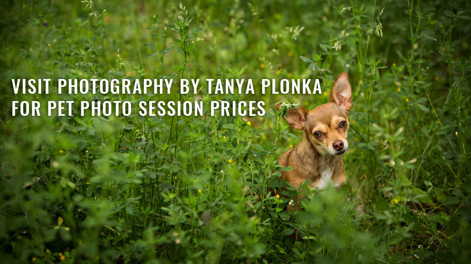 link to Lethbridge pet photography prices at Photography by Tanya Plonka