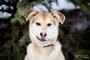 AARCS adoptable rescue dog in Lethbridge