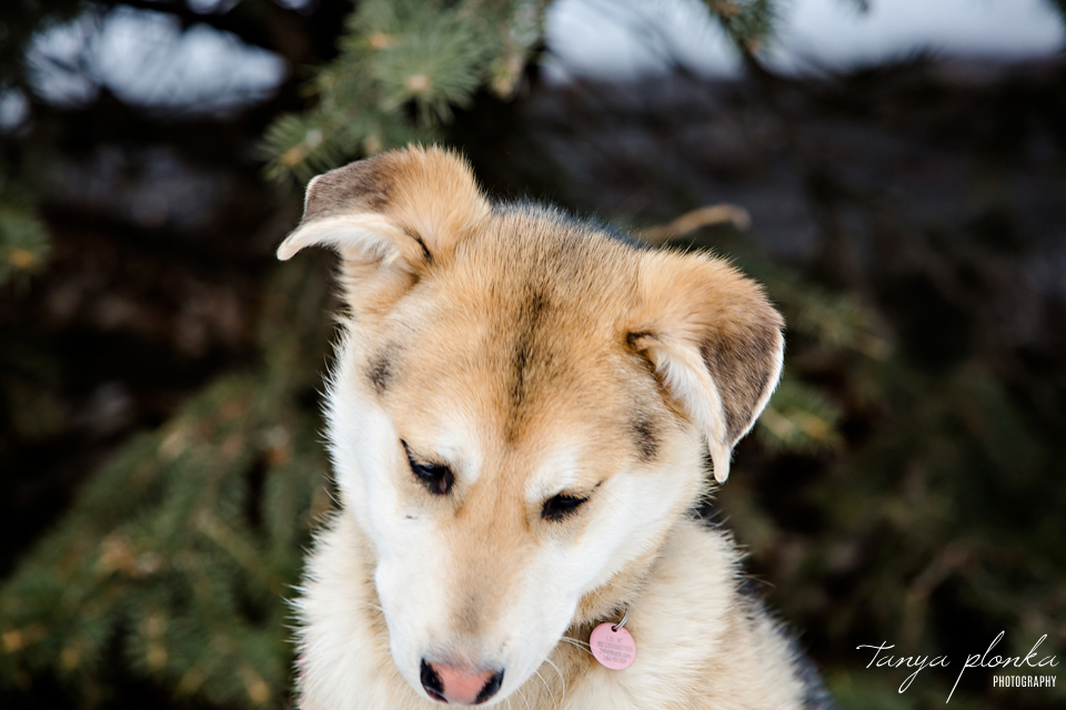 AARCS adoptable rescue dog in Lethbridge