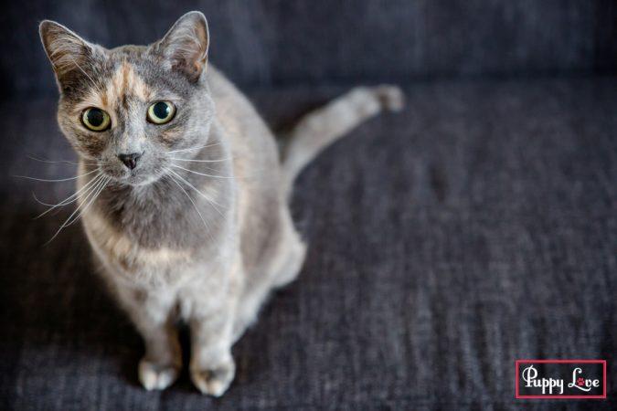 Lethbridge pet photographer